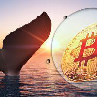 仮想通貨分析Clovr「ビットコイン鯨はメジャーアルトの保有割合を高めている」