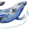 仮想通貨別「大口投資家割合と推移」ビットコイン、ETH、XRPほか|Coin Metrics調査